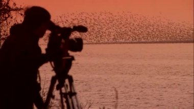 Man shooting video of flying birds
