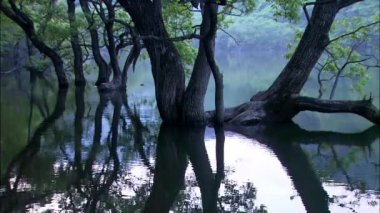 Trees reflecting on mirror surface of lake