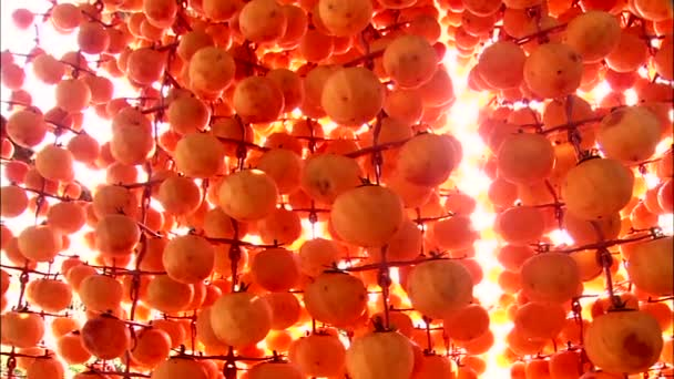 collection of hanging ripe persimmons on light background