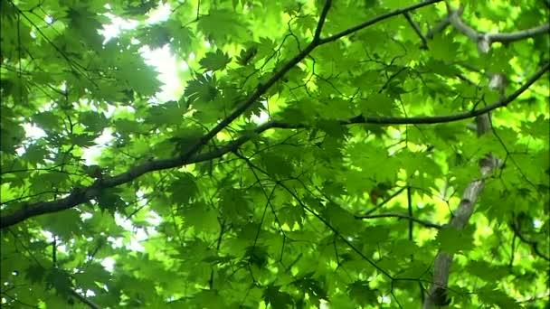 Jarní větve v Jinan-gun, Jeonbuk, Korea