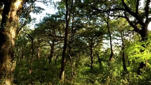 beautiful forest of Jeju-island
