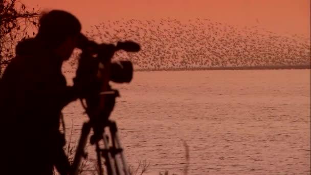 Mann, die Videoaufnahmen des Vogelflugs