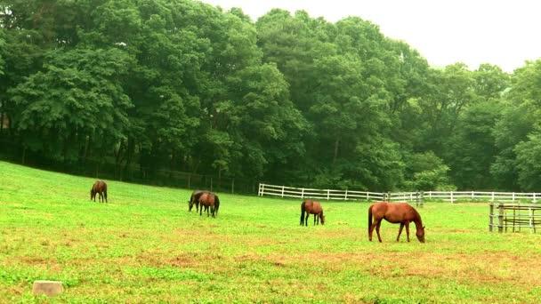 koně pasoucí se na zelené louce