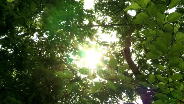 Oříznutý pohled zelených listů v parku