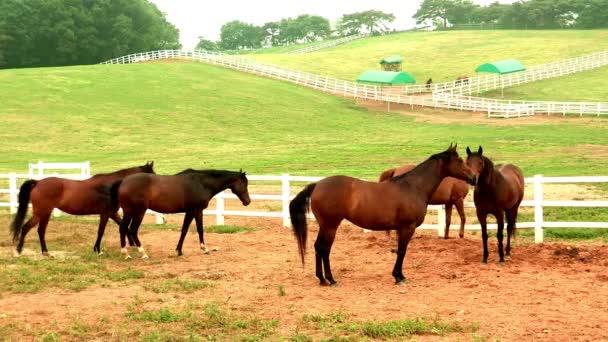 koně pasoucí se poblíž bílý plot