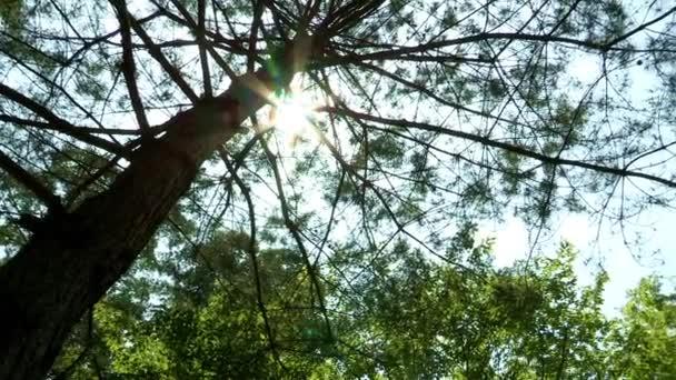 Sun lights through tree branches