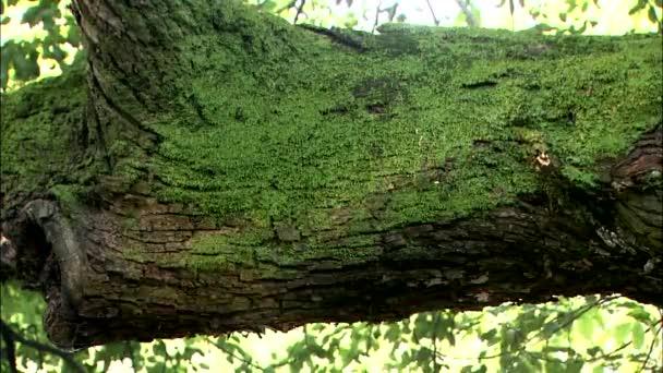 Vlny lesklé vody odrážející na starých mechem porostlé strom