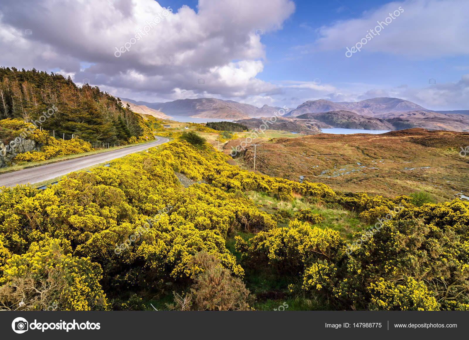 Fiori Gialli Scozia.Higlands Scottish Landscape Scotland Great Britain Stock Photo
