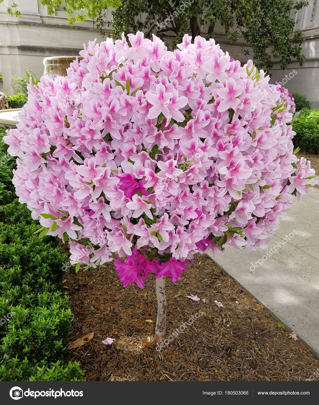arbre fleur globulaire lys en fleurs — photographie 3000ad © #180503066