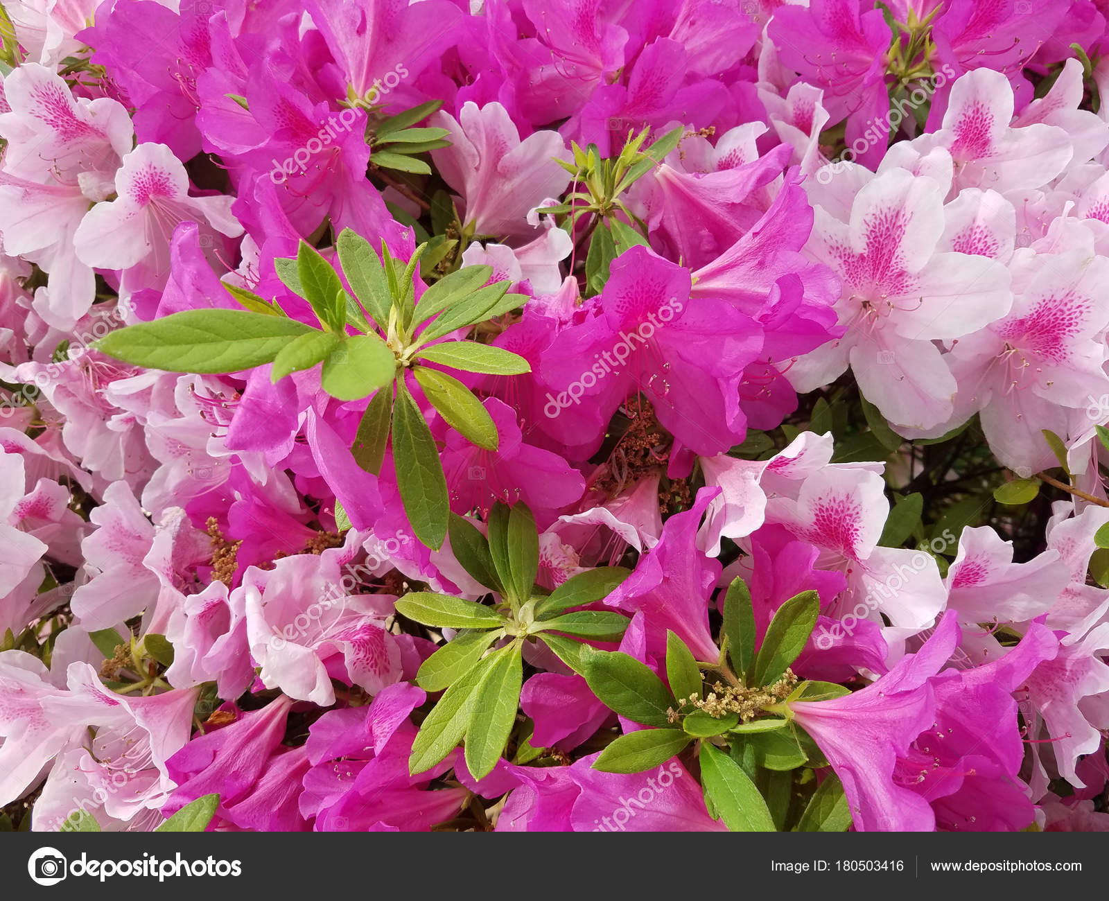 Lily Flower Tree In Bloom Stock Photo 3000ad 180503416