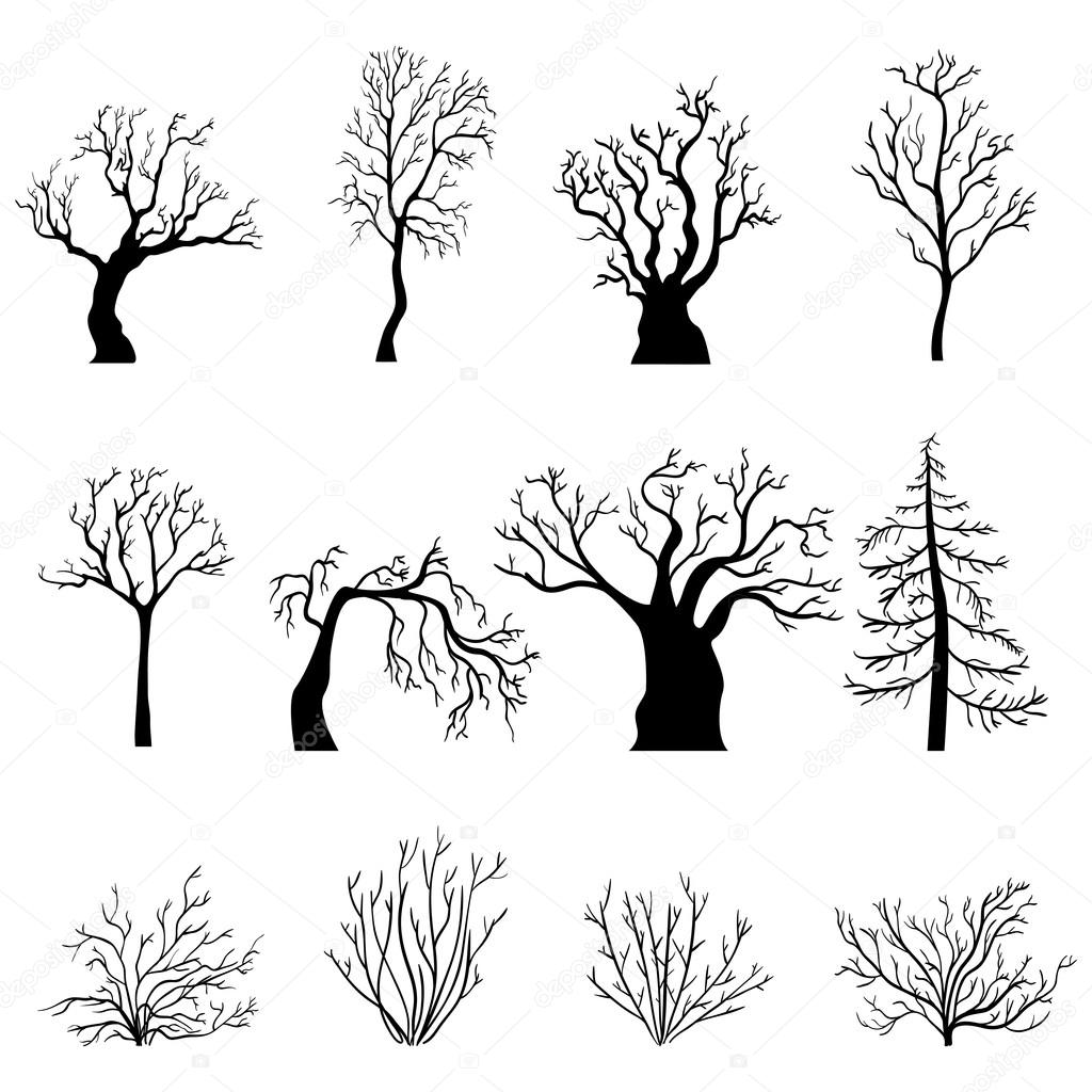 Silhouettes of Bare Trees and Bushes