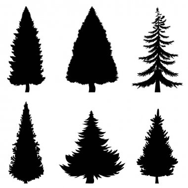 Black Silhouettes of Pine Trees