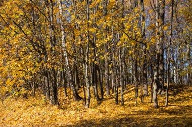 Golden autumn in Bitsa Park in Moscow