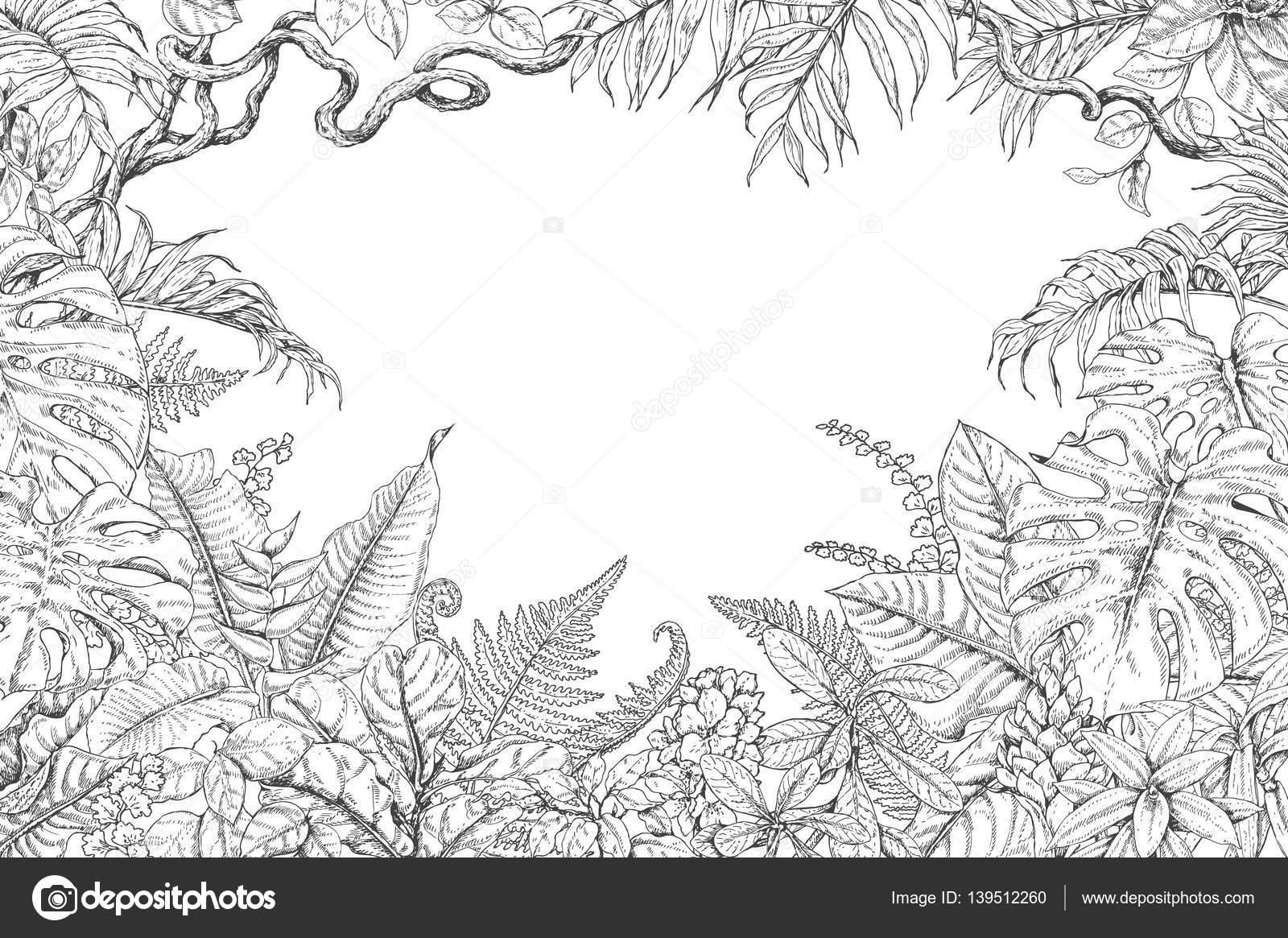 Imágenes: marco de la selva para colorear | Marco plantas tropicales ...