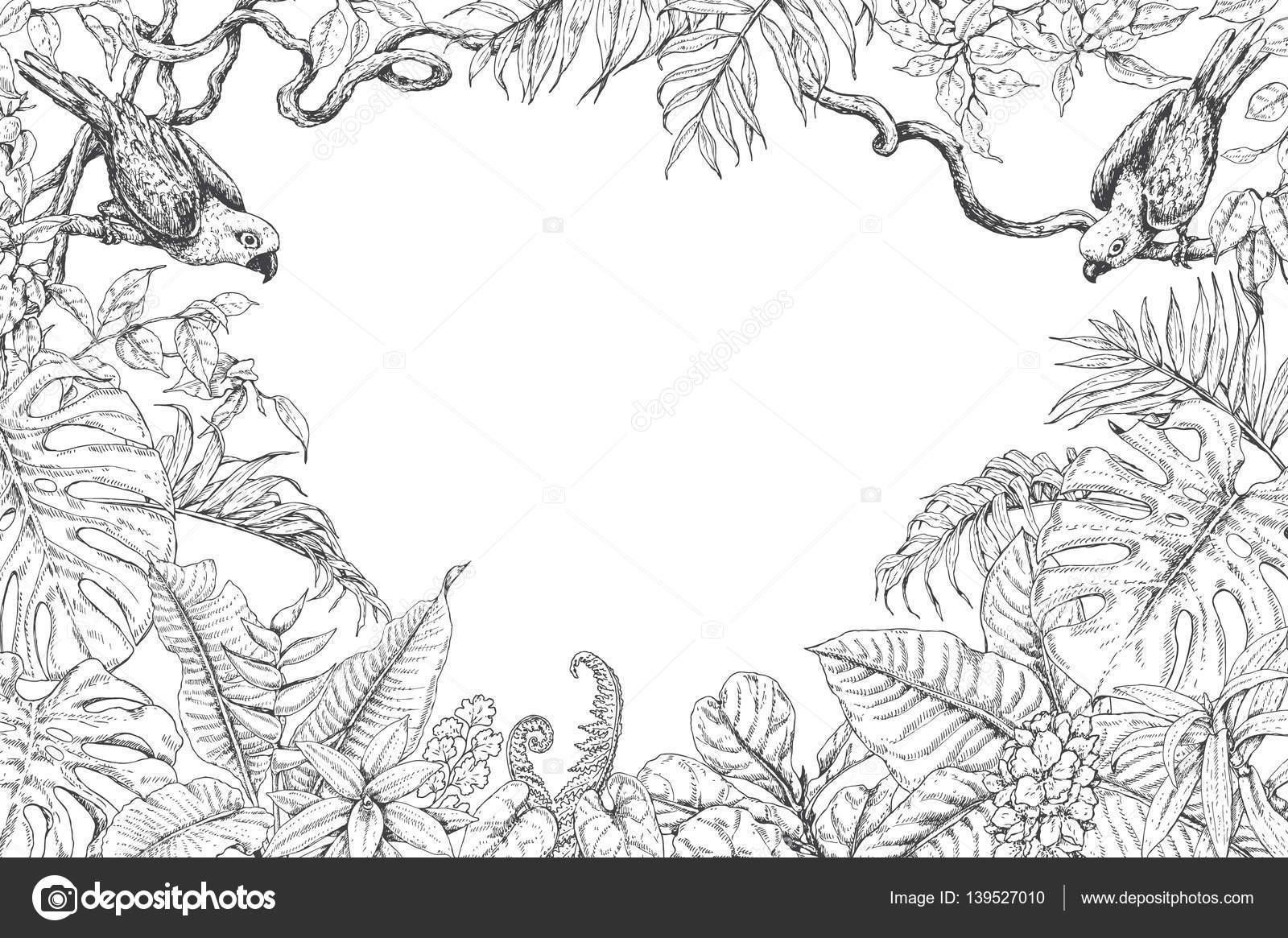 Marco de aves y plantas tropicales — Vector de stock © Valiva #139527010