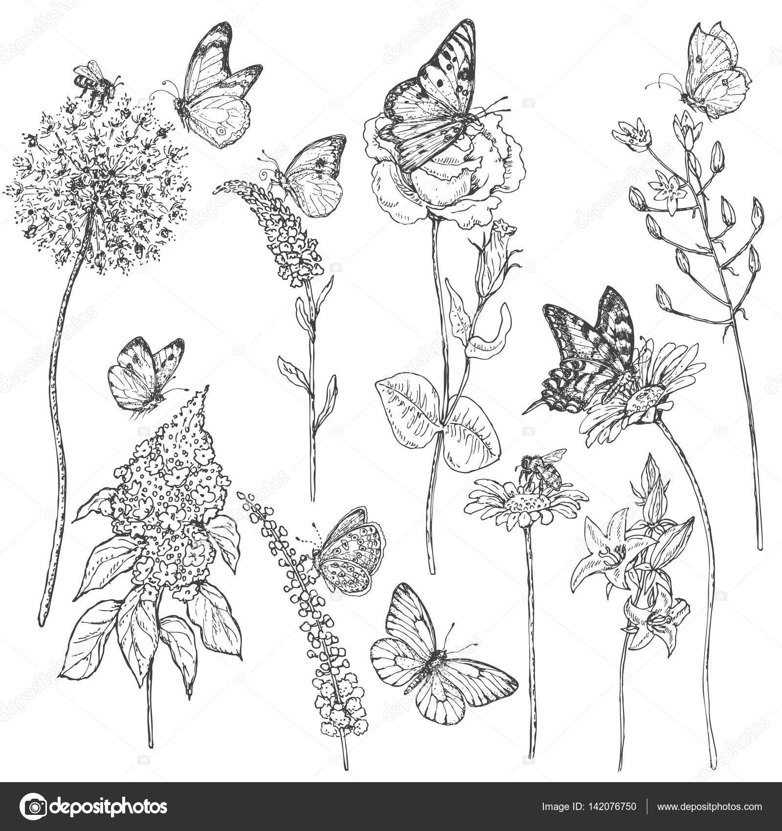 Dibujos Polinizacion Para Colorear Dibujo De Flores Silvestres Y
