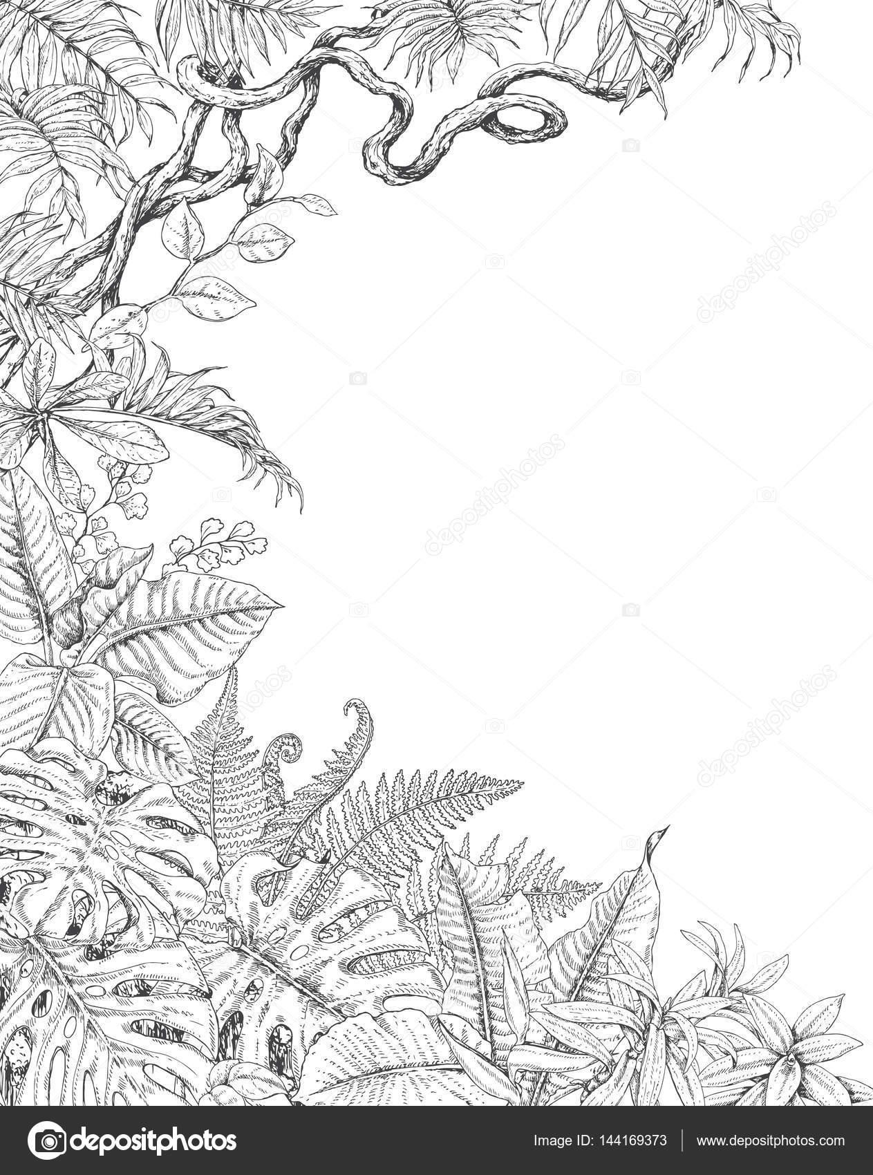Imágenes: lianas para colorear | Una cara de fondo con plantas ...