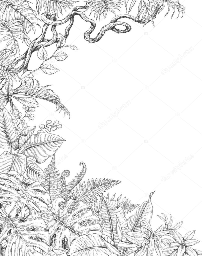 One Sided  Background with Tropical  Plants