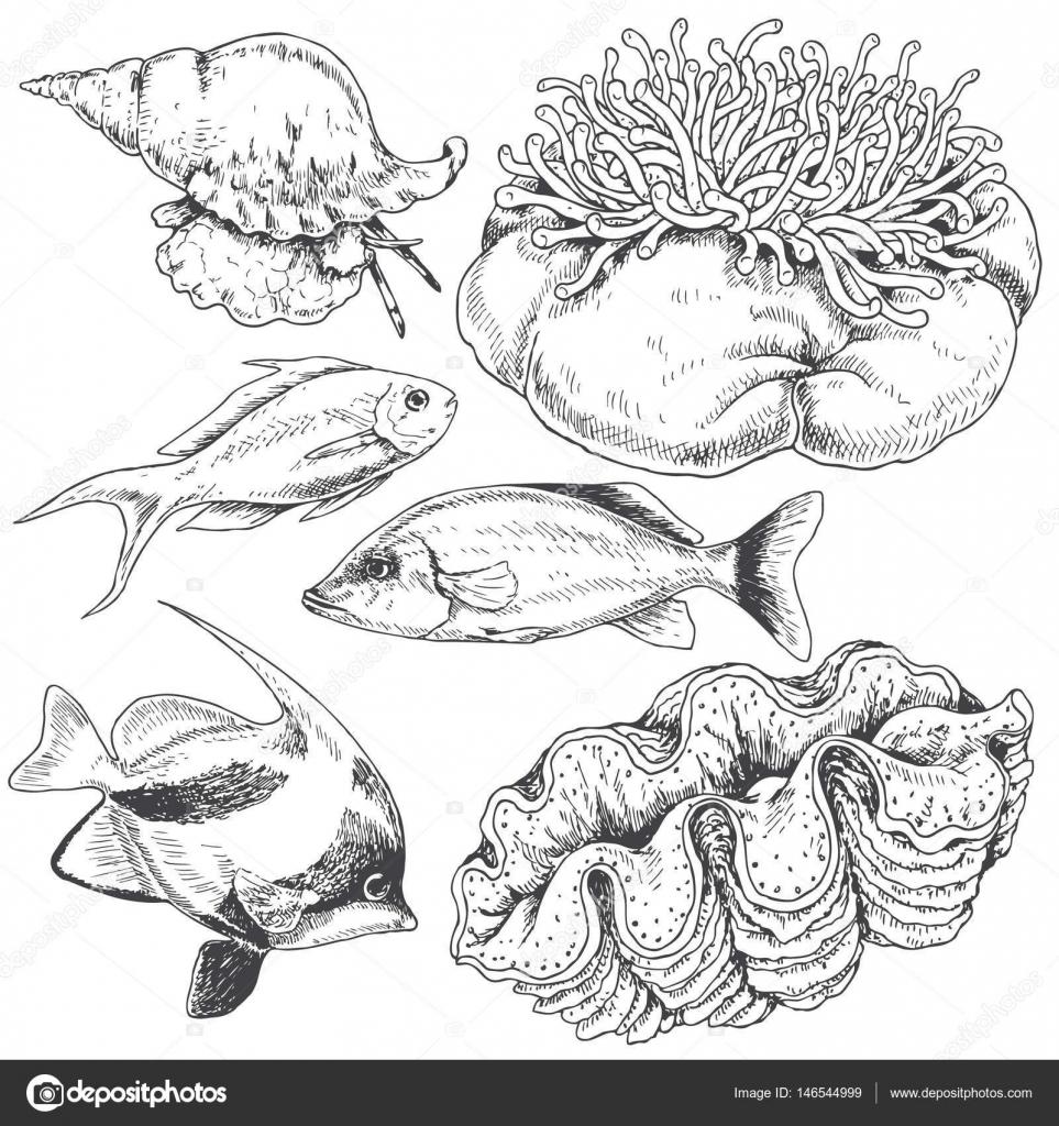 Dibujos Objetos Naturales Para Colorear Conjunto De Animales De