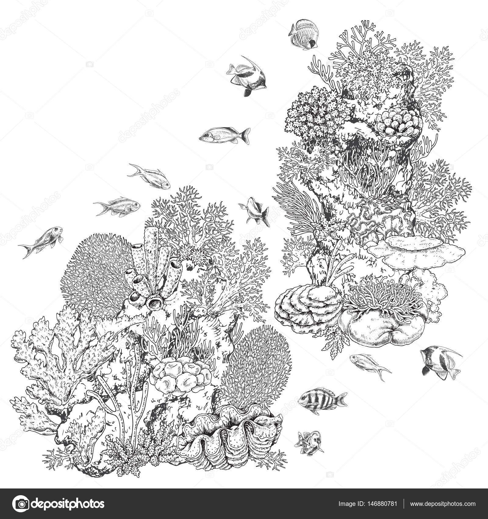 Arrecife de corales y peces — Vector de stock © Valiva #146880781