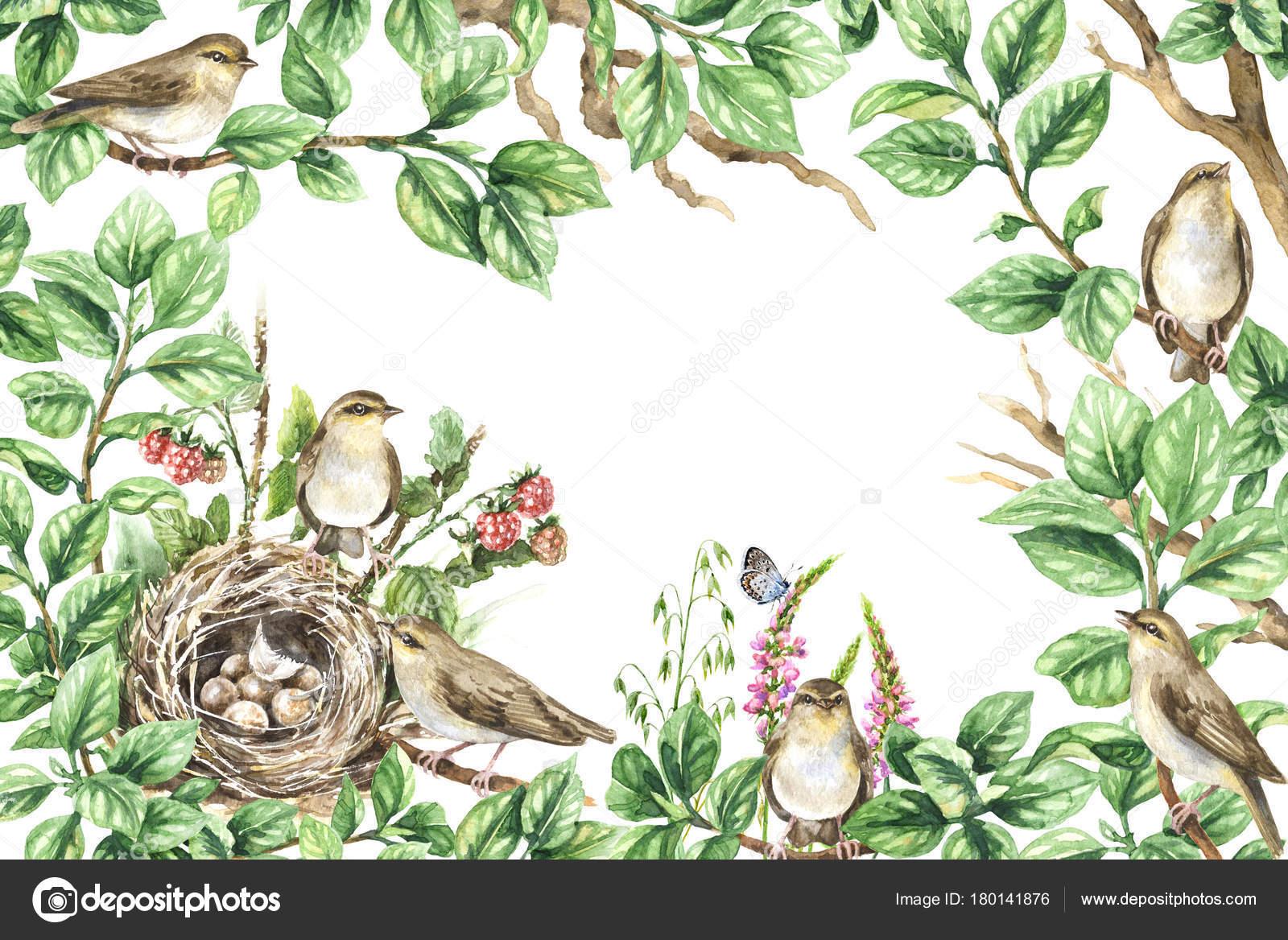 Marco floral con pájaros en las ramas — Foto de stock © Valiva ...