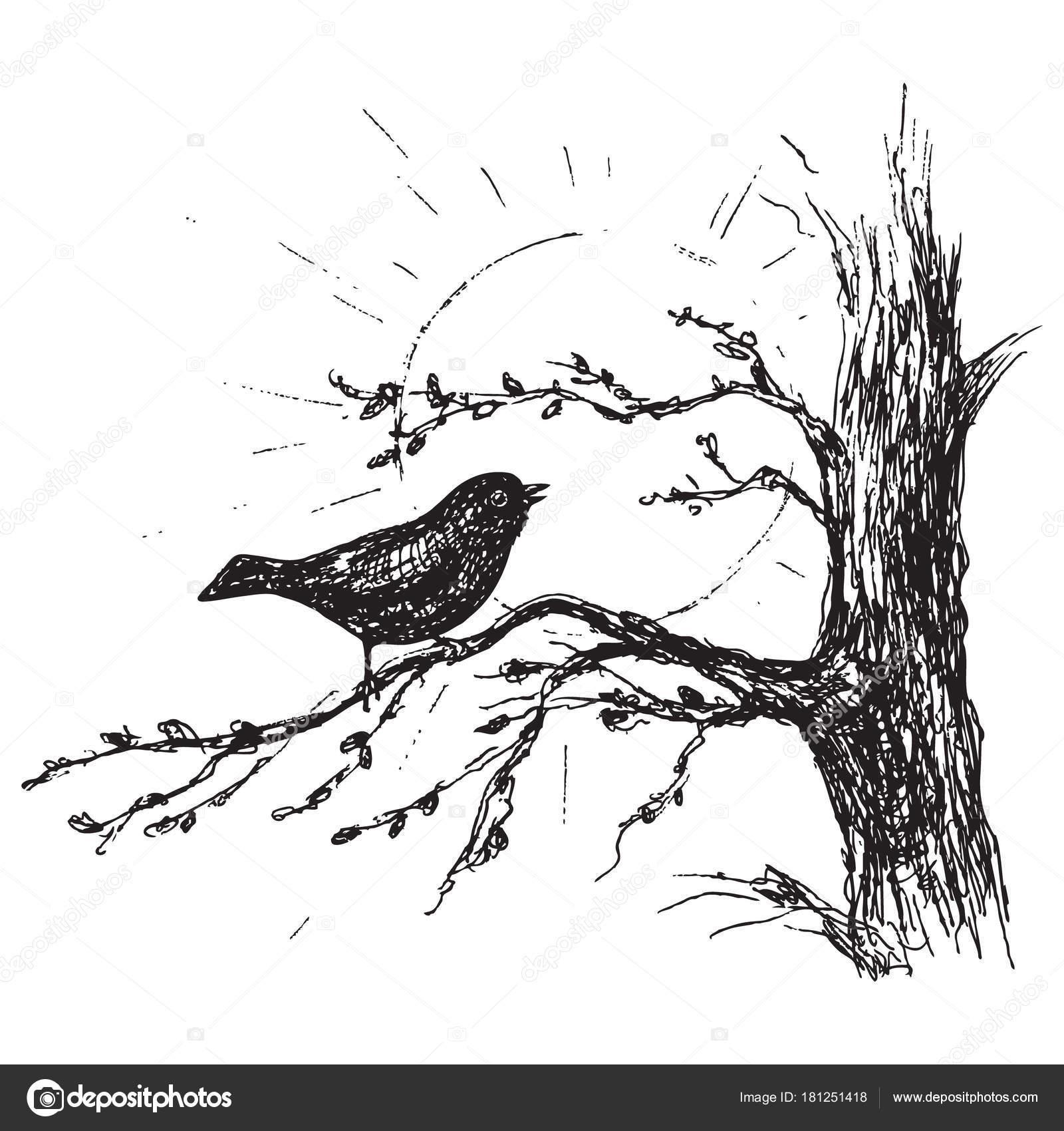 Dessin Oiseau Chante Sur Arbre Image Vectorielle Valiva