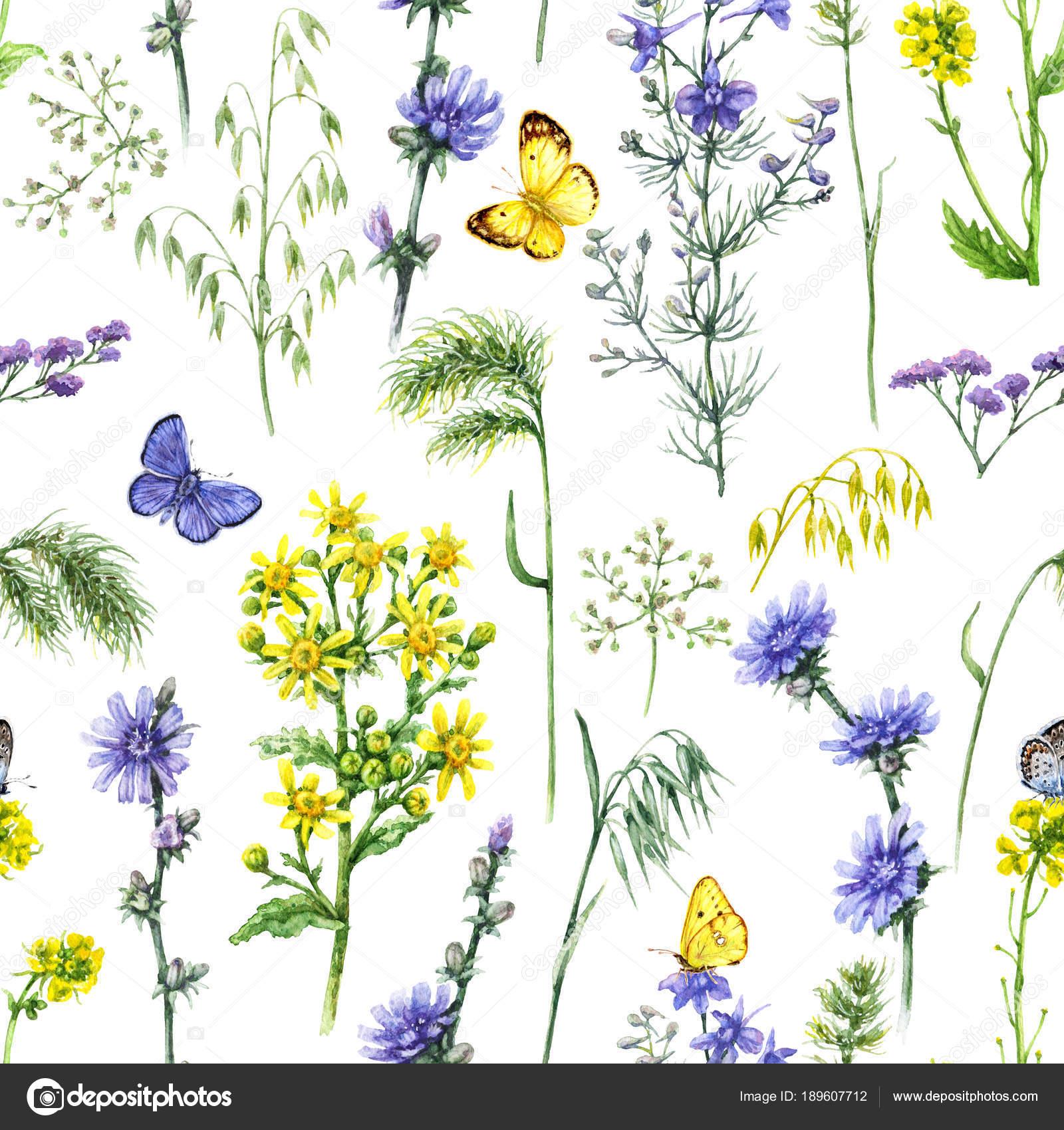 Dessin de fleurs de champ bleu et jaune\u2013 images de stock libres de droits