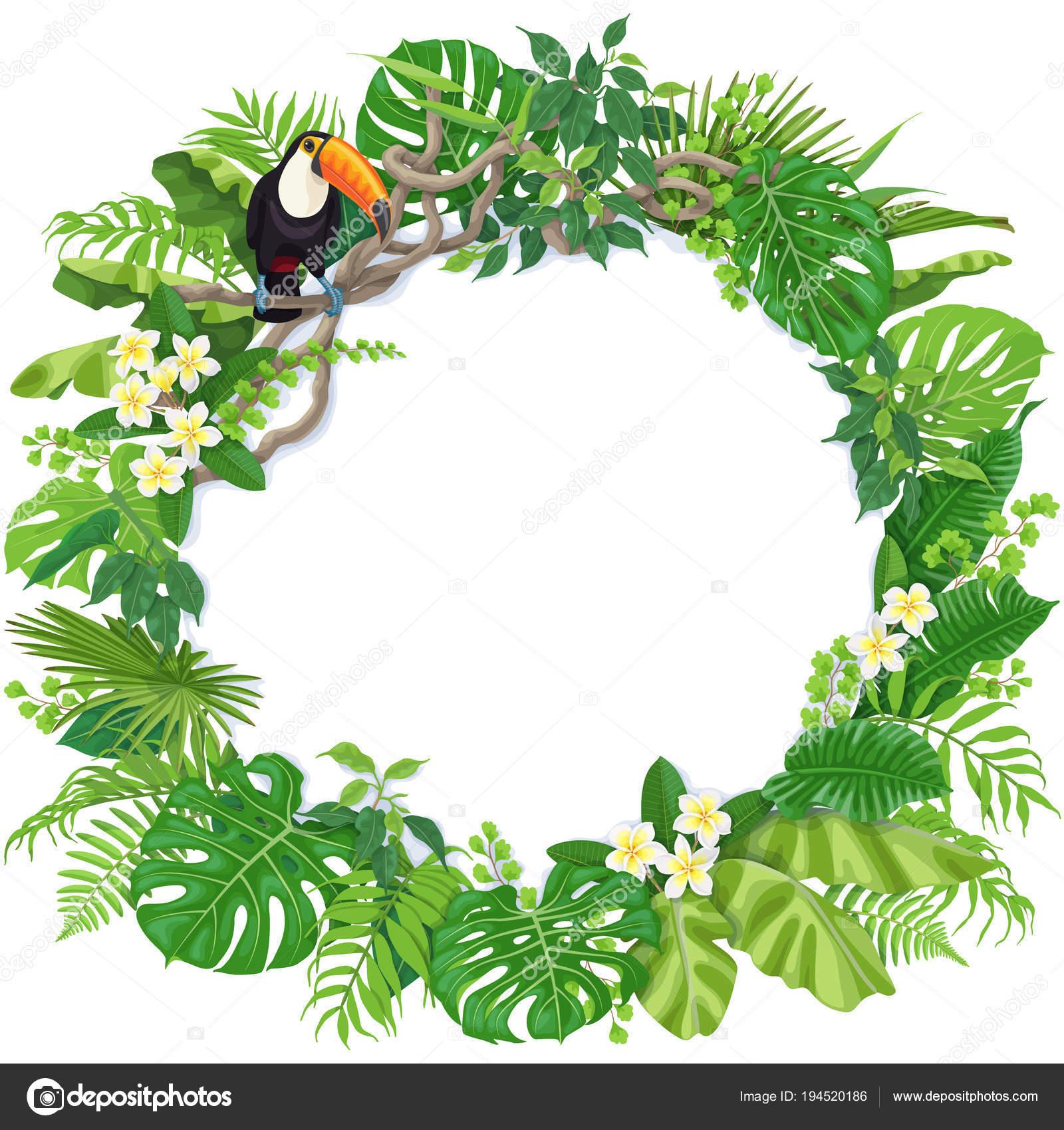 Marcos para hoja de vida marco redondo con plantas tropicales y tuc n vector de stock - Marcos para plantas ...