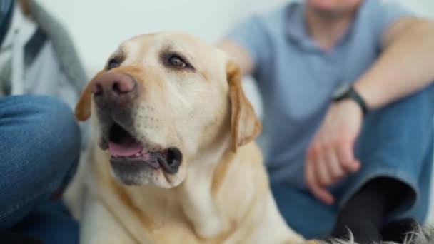 Detailní záběr Man mazlení Labrador retrívr pes