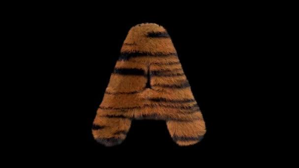 3D animierte pelzige haarige Zoo-Tiger-Schrift mit Alphakanal a