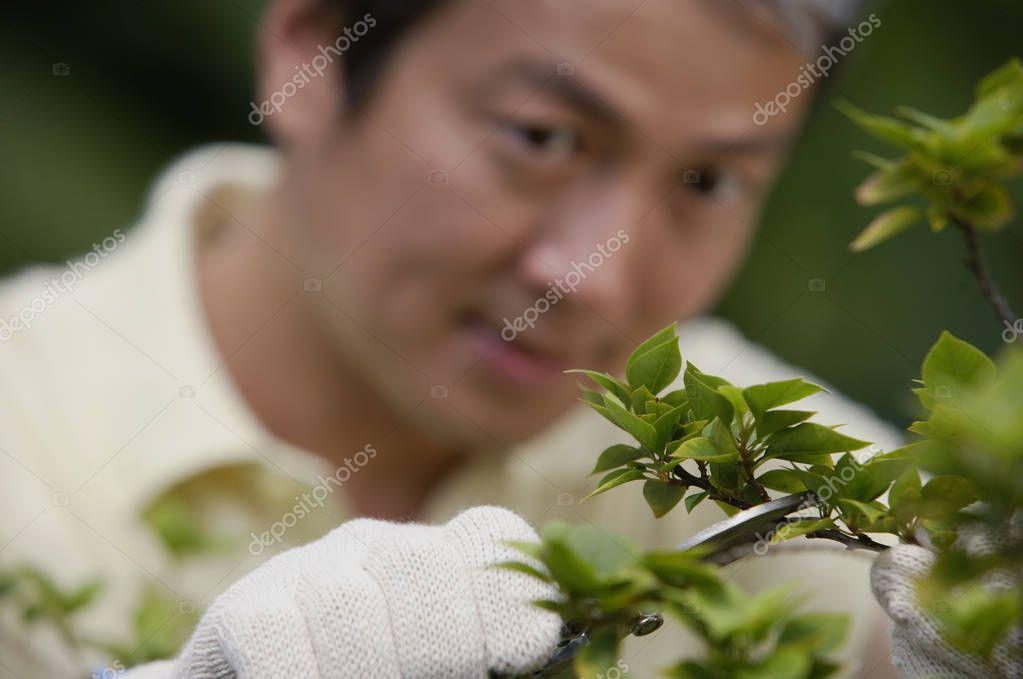 Mature man pruning plant