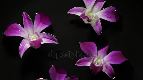 Úszó víz orchideák