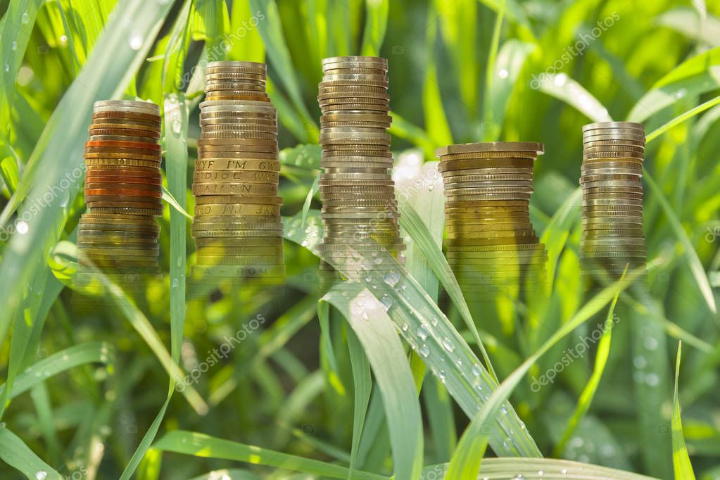 Raindrops on Pendulous Sedge Grass Leaves