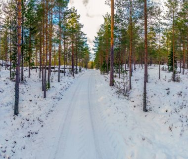 Forest and frozen landscape  in winter with snow covered ground