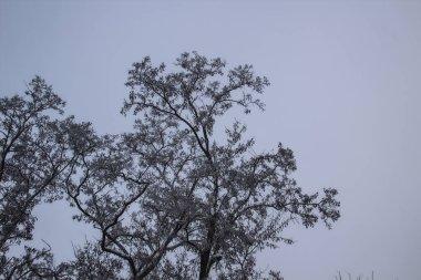 """Картина, постер, плакат, фотообои """"деревья в зимний день. туманный день """", артикул 319601612"""