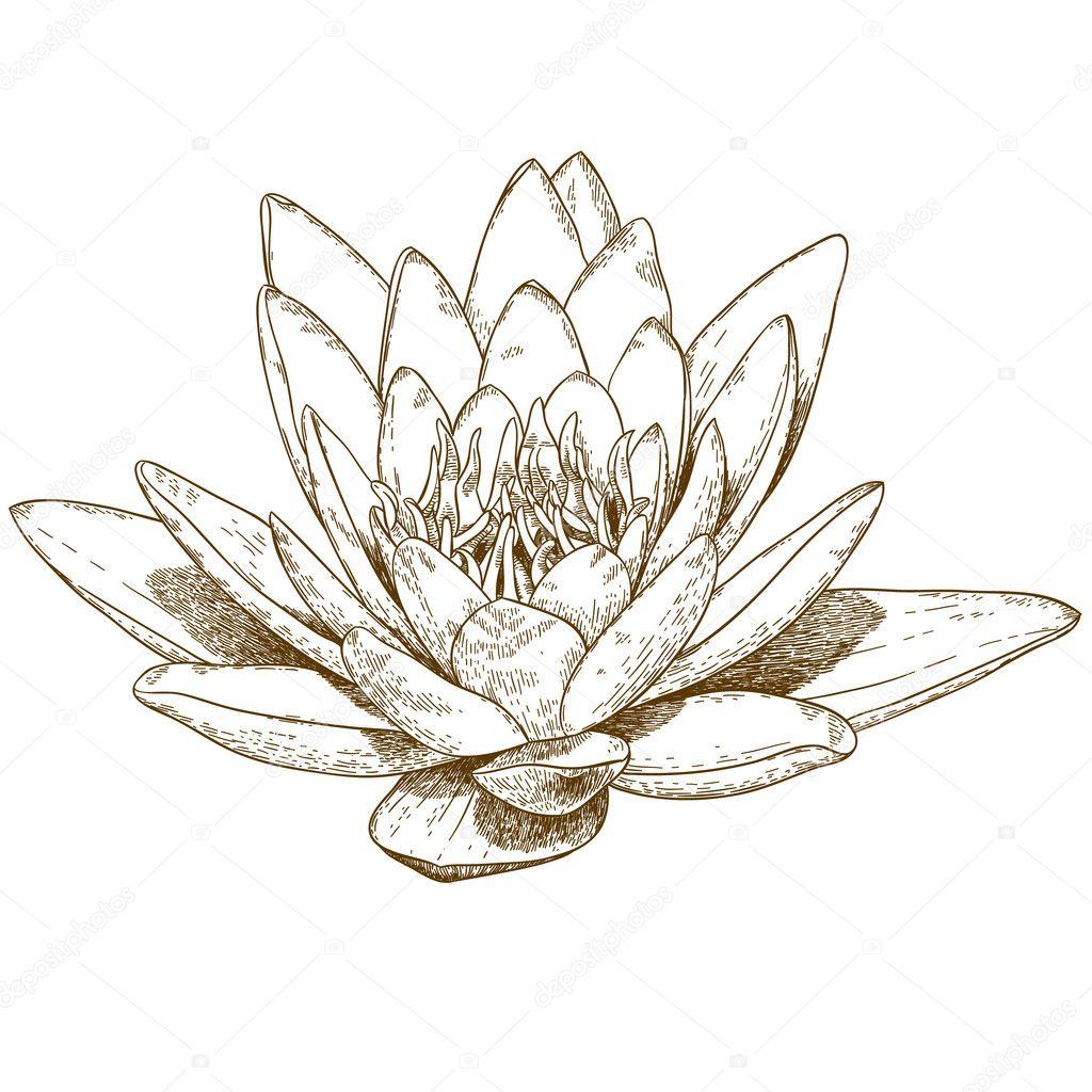 睡蓮の花のイラストを彫刻 ストックベクター Andreyoleynik 124890396