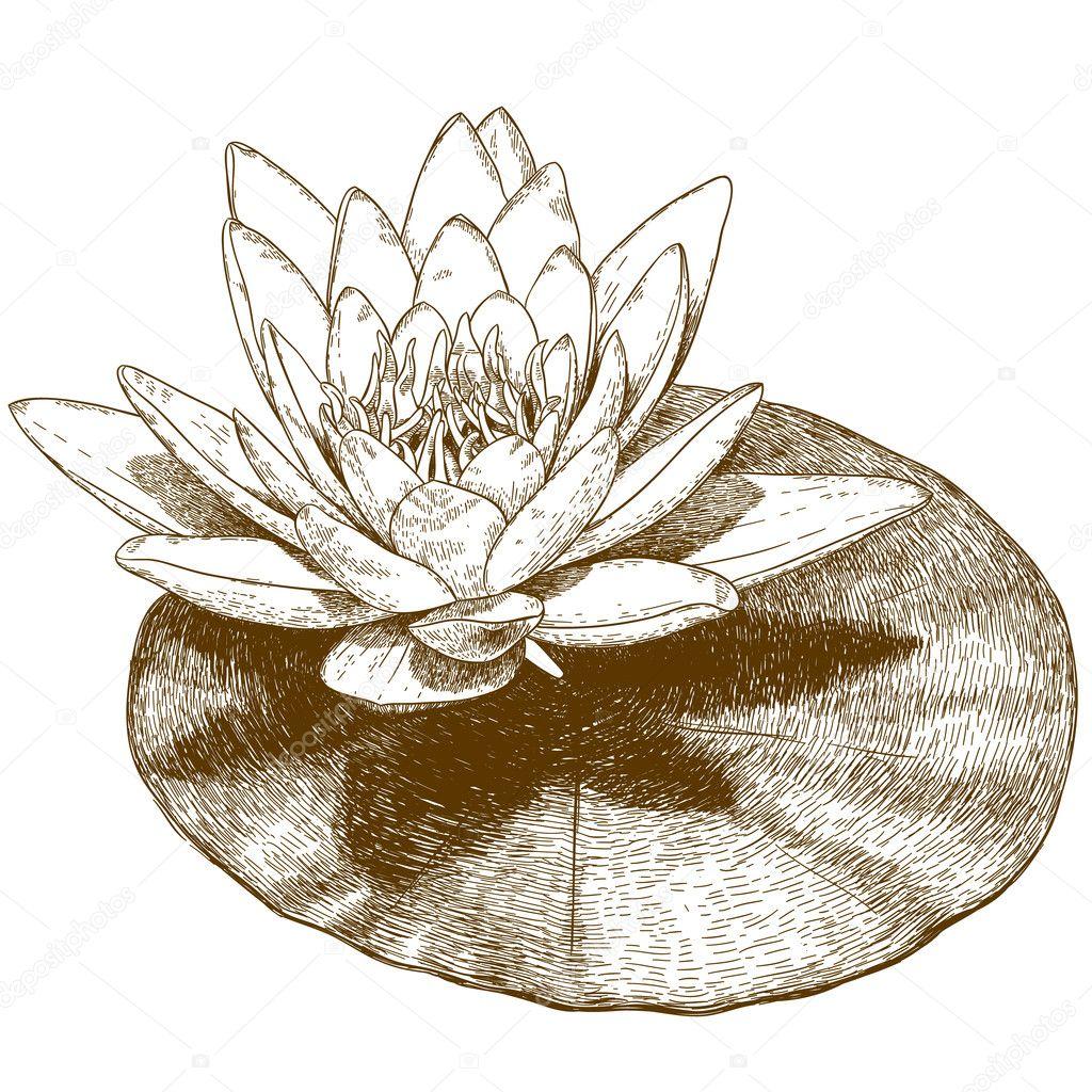 睡蓮の花のイラストを彫刻 ストックベクター Andreyoleynik 124890448