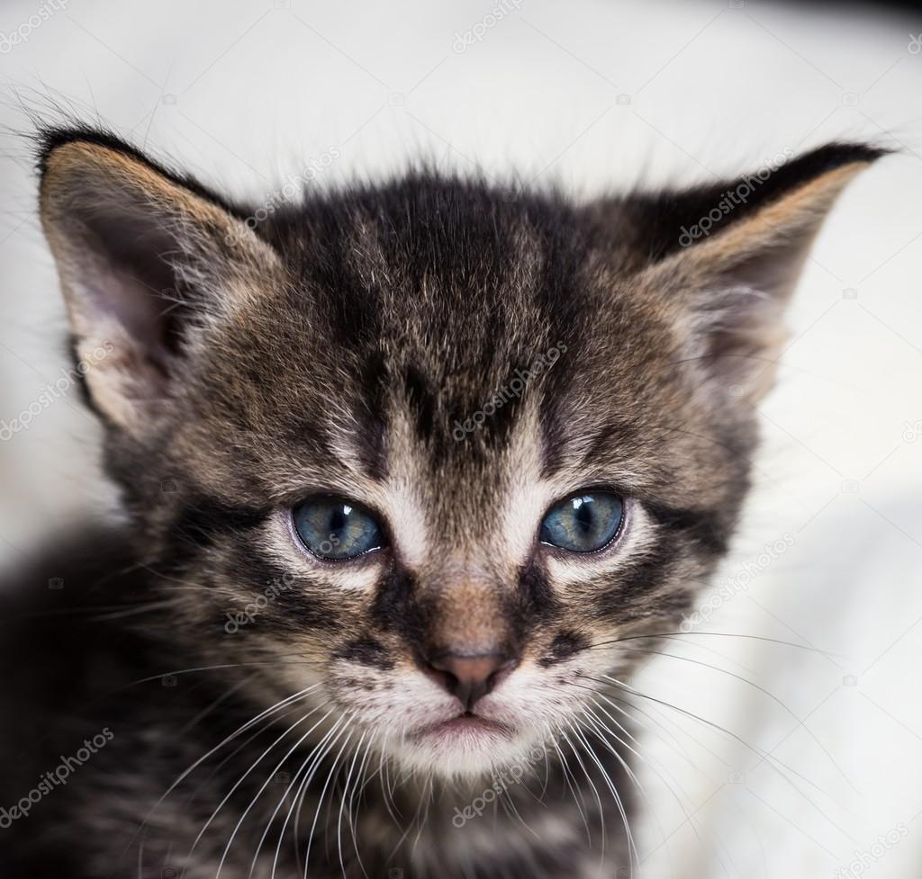 chatte crémeuse foncée mamans n fils porno