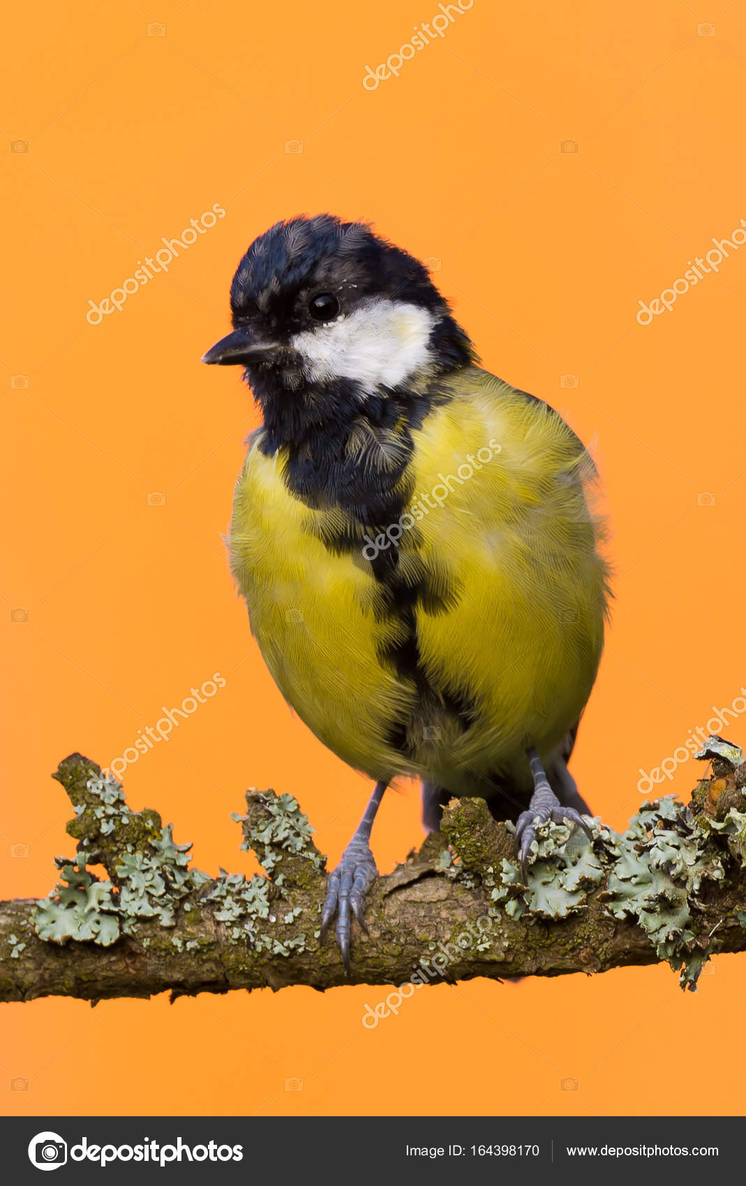 muž velké ptáky