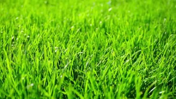 Pozadí jasně zelené trávy