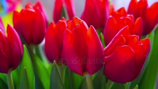 Barevné kytice květů červené tulipány, rotace