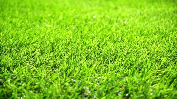 Green grass field moved by summer wind nature