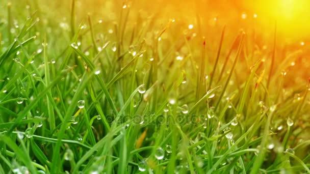 Kapky rosy na jasně zelené trávy