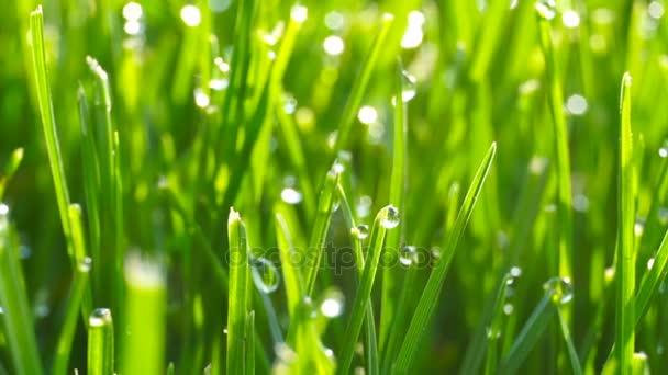 Kapky rosy na jasně zelené trávy s sluneční erupce