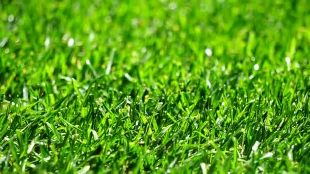 Nahaufnahme von frischem frühlingsgrünem Gras mit Wassertropfen