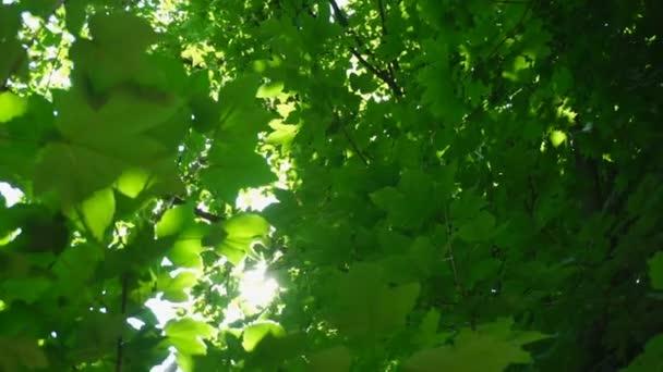 Zelené listy a slunce s krásnou objektivu flare proti slunečnímu záření