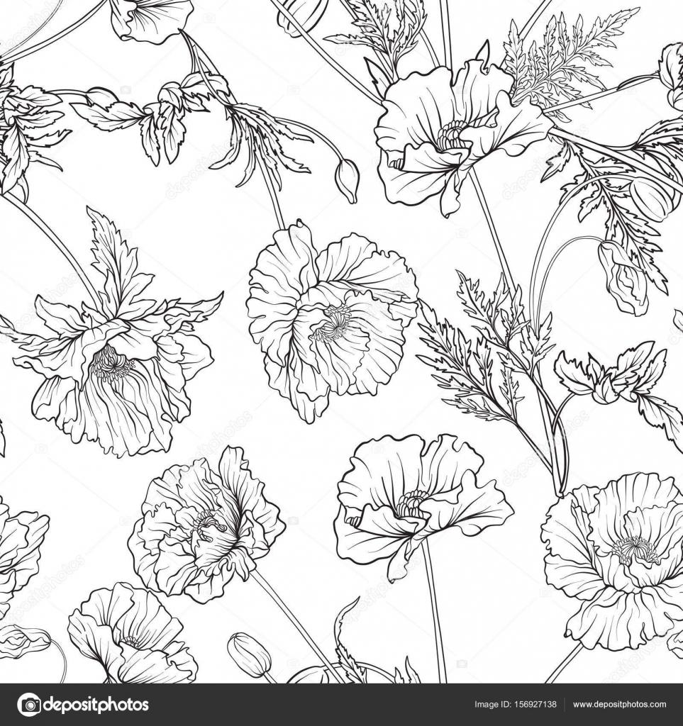 Patrón transparente con flores de amapola en botánica estilo vintage ...