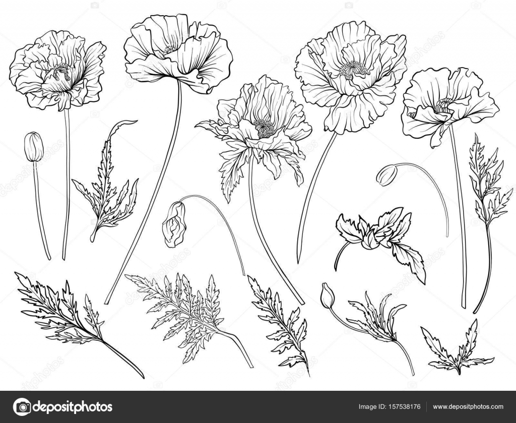 Poppy flowers set of outline flowers stock vector poppy flowers set of outline flowersock line vector illustration outline hand drawing coloring page for coloring book vector by elenabesedina mightylinksfo