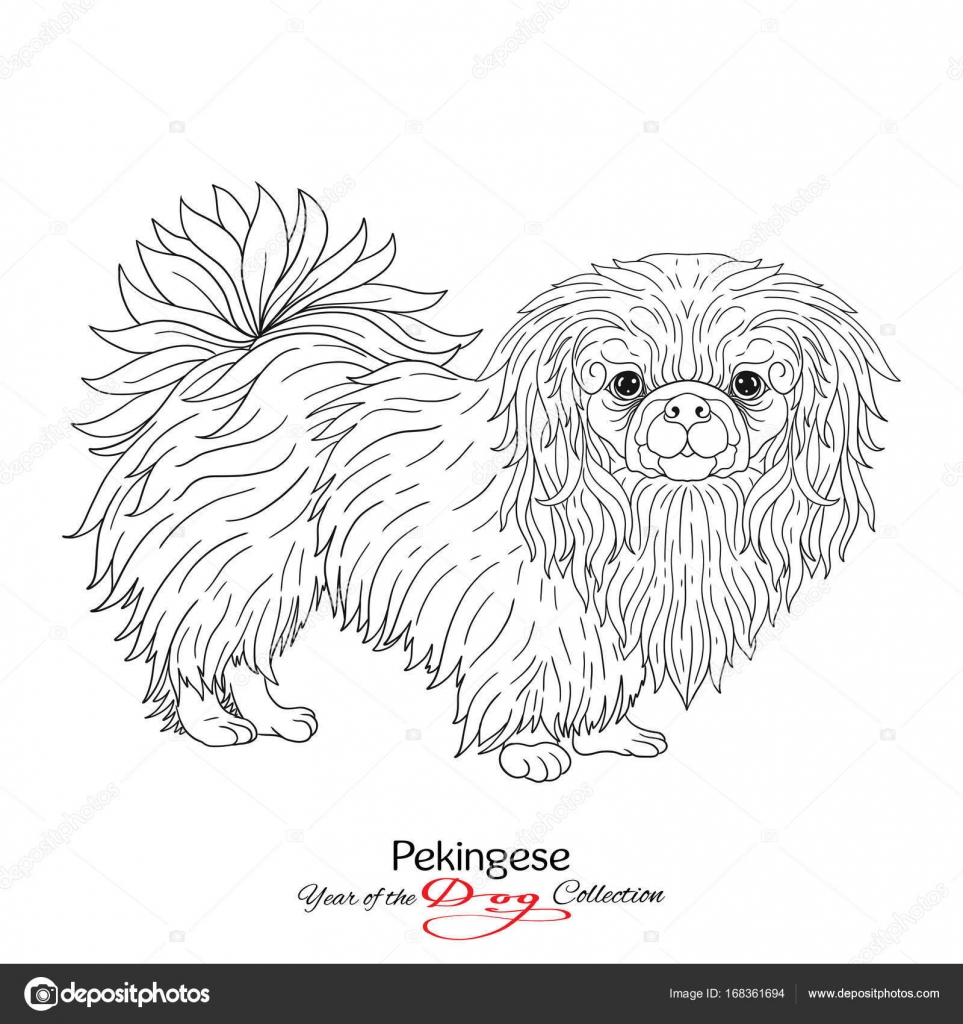 Pekingsky Palacovy Psik Cerna A Bila Grafika Kresba Psa Stock