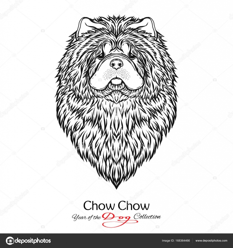 Chow Chow Black And White Graphic Drawing Of A Dog Stock